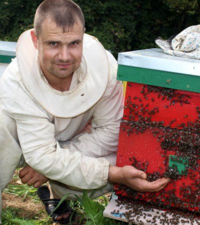 Работы на пасеке в августе-сентябре: подкормка и подготовка пчел к зиме