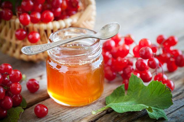 Калина с медом на зиму: рецепты приготовления