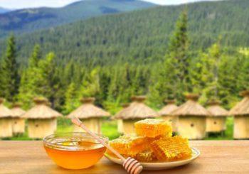 Полезные свойства горного меда, правила употребления и дозировки, противопоказания и возможный вред