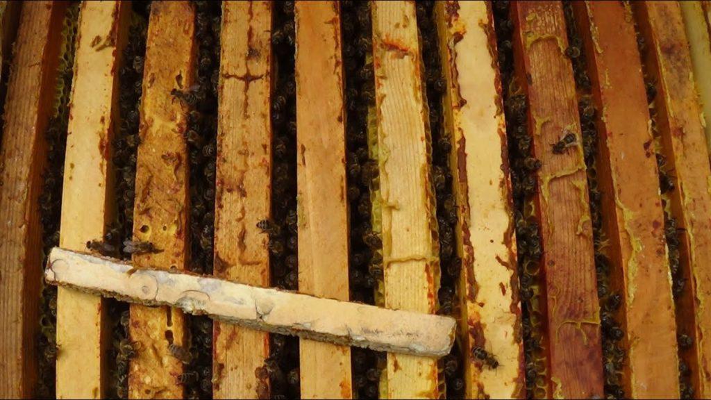 Пчелы в сентябре: правила подготовки пчелосемей к зиме и сборки пчелиного гнезда, видео для новичков